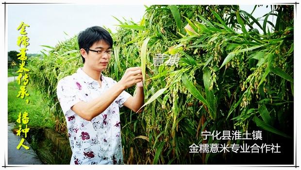 金糯薏米专业合作社