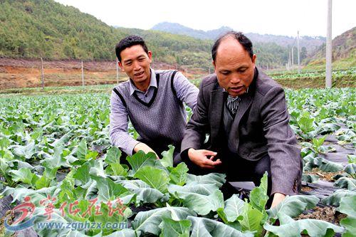 多走一线,农户的收成就多份保障