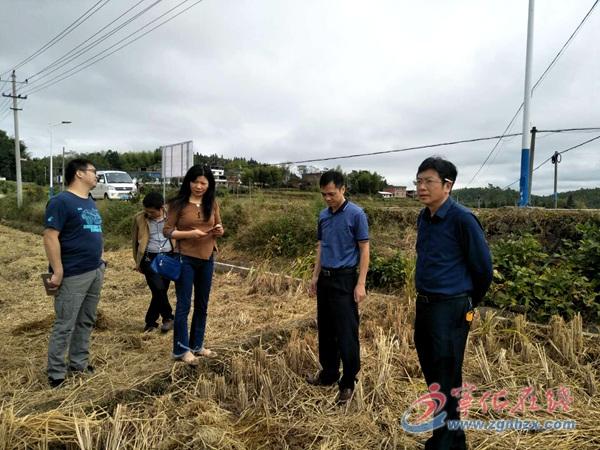 省农业厅督导组来宁化督导冬种紫云英种植