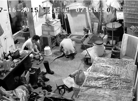 百人团伙贩卖保护动物 曾1次交易上千只穿山甲