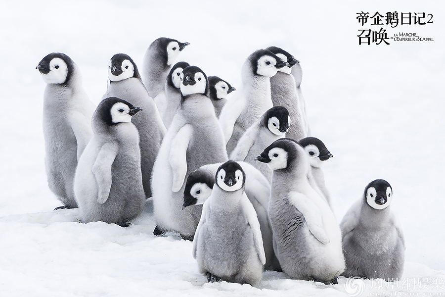 《帝企鹅日记2》震撼回归 江一燕暖心演唱推广曲