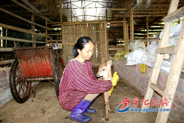 邓雪金:养殖梅花鹿走上致富路