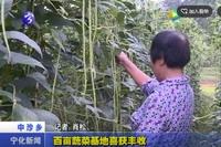 百亩蔬菜基地喜获丰收