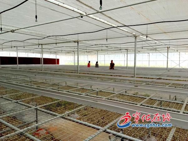 宁化打造牡丹文化产业园