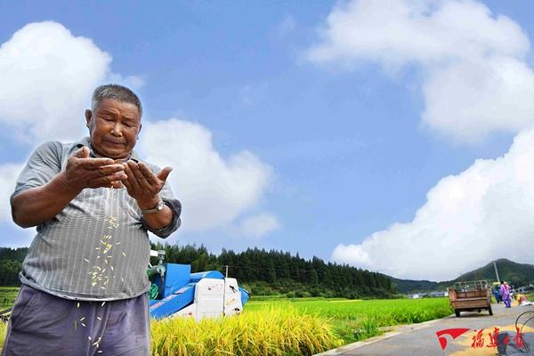 稻子熟了,宁化人回家割禾了!