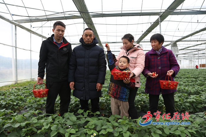 """【新春走基層】寧化湖村鎮︰""""紅顏""""草莓誘客來(lai)"""