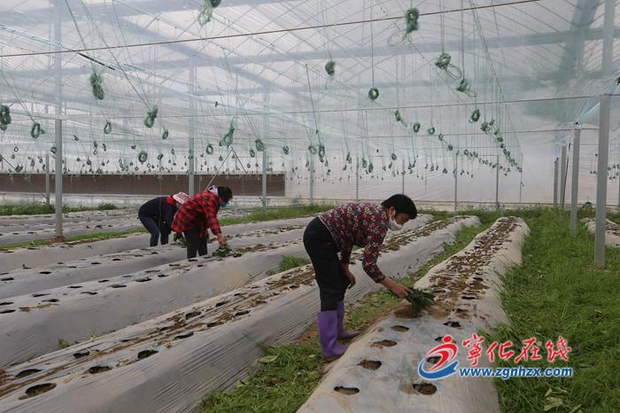 組圖︰寧(ning)化蔬菜(cai)種(zhong)植不停(ting)歇(xie)