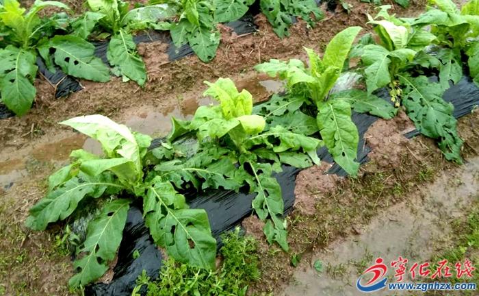 寧化水茜鎮遭遇強降(jiang)雨冰雹災害,積極開展災後自救