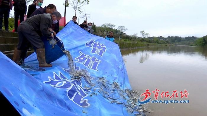 寧化︰人工(gong)增殖(zhi)放(fang)流魚苗(miao)60萬尾 修復(fu)水域生態環境