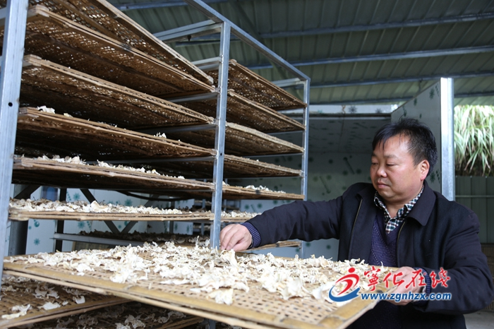 寧化畬鄉︰he)裰竇庸?chuang)產值4755萬