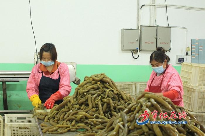 寧(ning)化︰小黃瓜產業助力精準扶貧