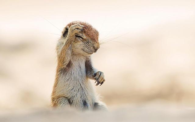 最搞笑动物摄影大赛 获奖作品 宁化在线图片频