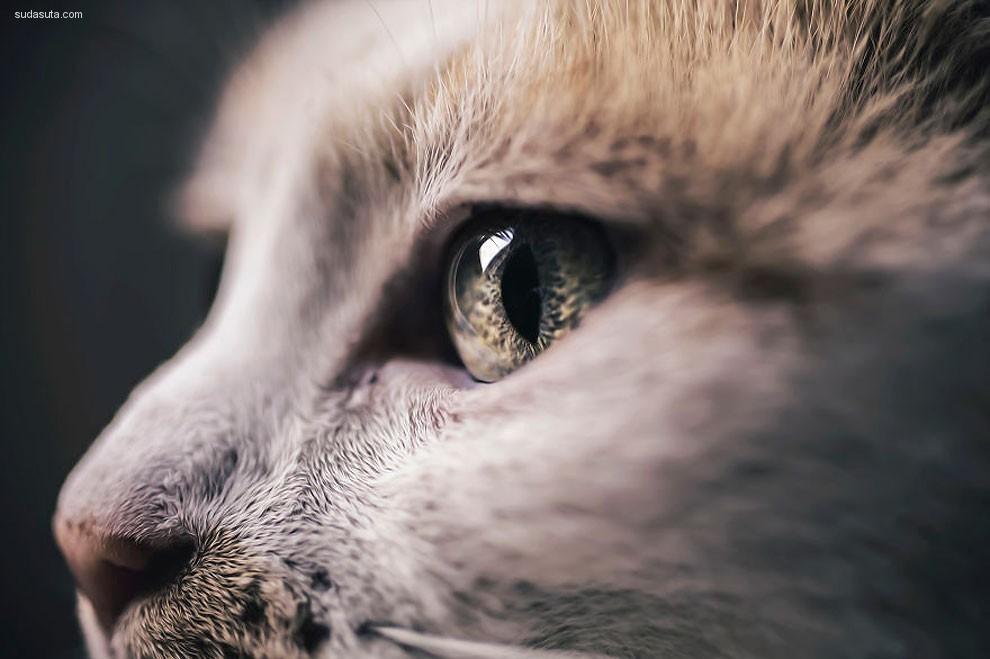 猫咪界的网红