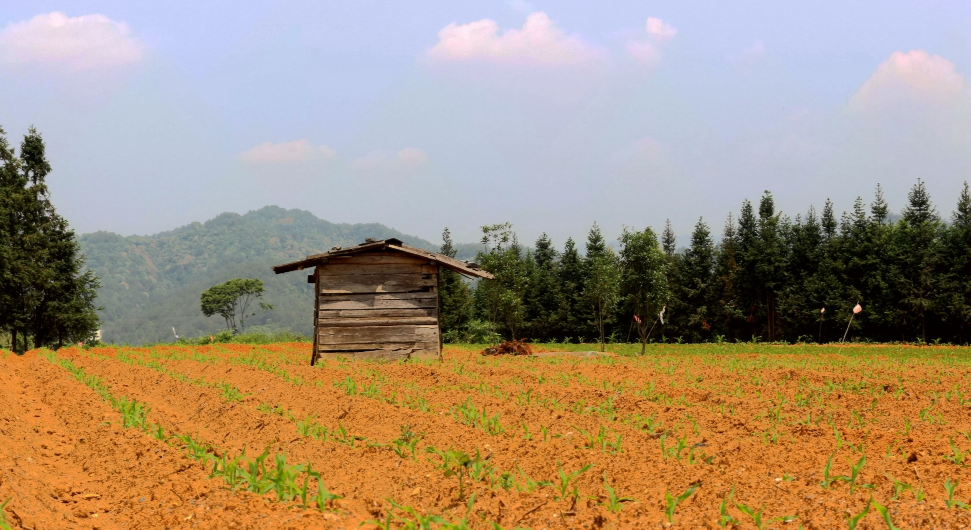 湖村景色(吴伟亮/摄)