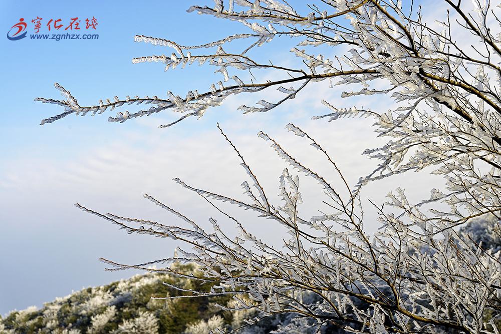 牙梳(shu)山金華(hua)頂雪景-王振階/攝