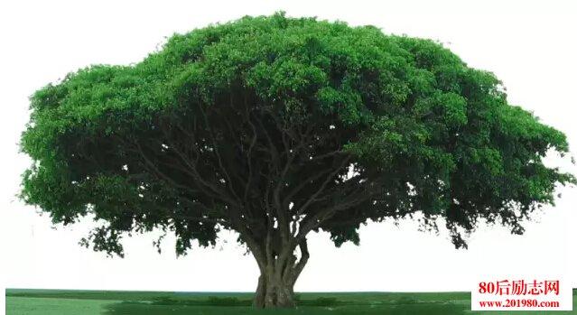 想成为大树 就不要和草去比!企业管理的大树理论