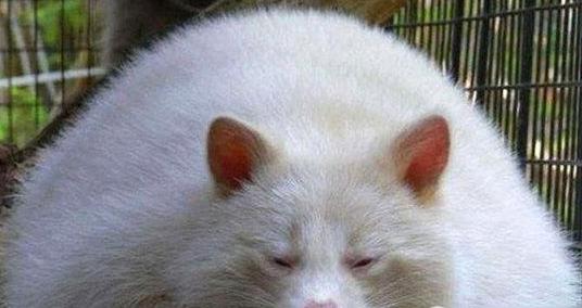 全球十大最胖动物-宁化在线旅游美食