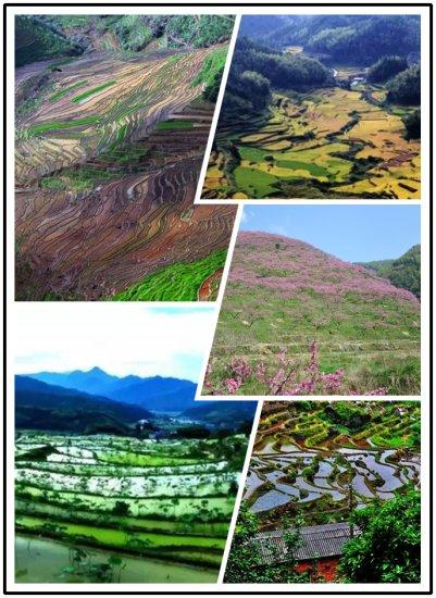 三明市推出四条梯田之旅专项游线路 观赏不一样花海的梯田美景